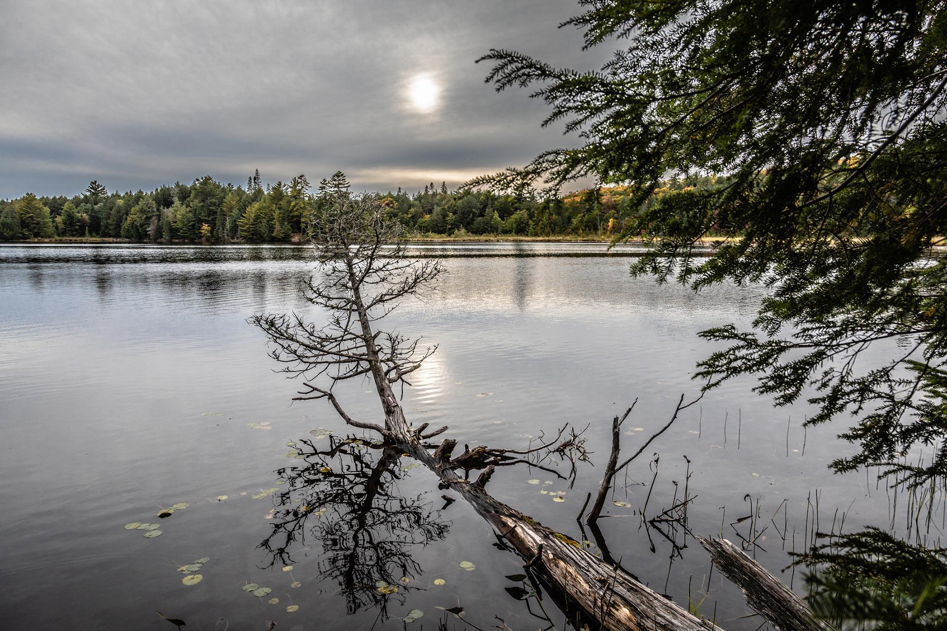 fallen tree in lake